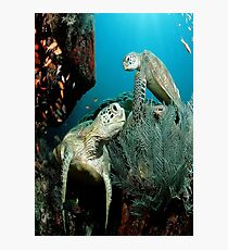 Turtle in the Ocean Photographic Print
