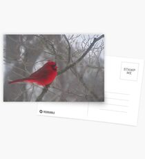 Cardinal Calm in Chaotic Conditions Postcards