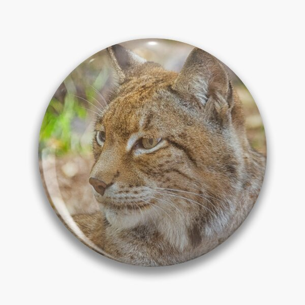 Lynx in close up Pin