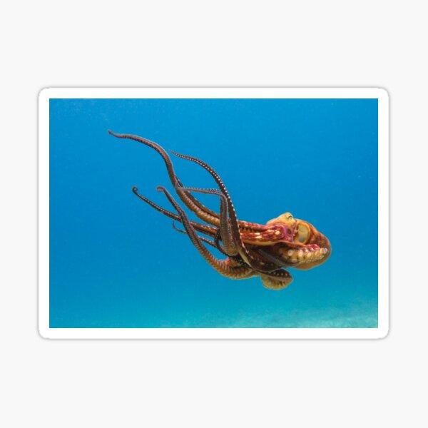 Blue Ocean Sea Monster Octopus Sticker