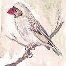 Red-billed Quelea Juvenile Male by Maree Clarkson