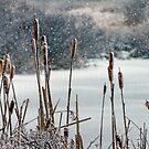 Winter Cattails by Debbie  Roberts
