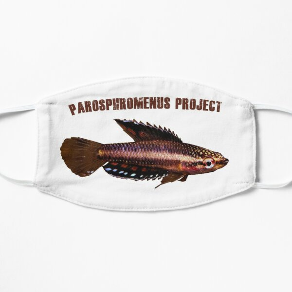 Parosphromenus parvulus Flat Mask