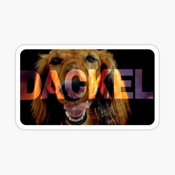 Dachshund Design - I love Dachshunds! Sticker