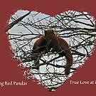 Kissing Red Pandas by CreativeEm