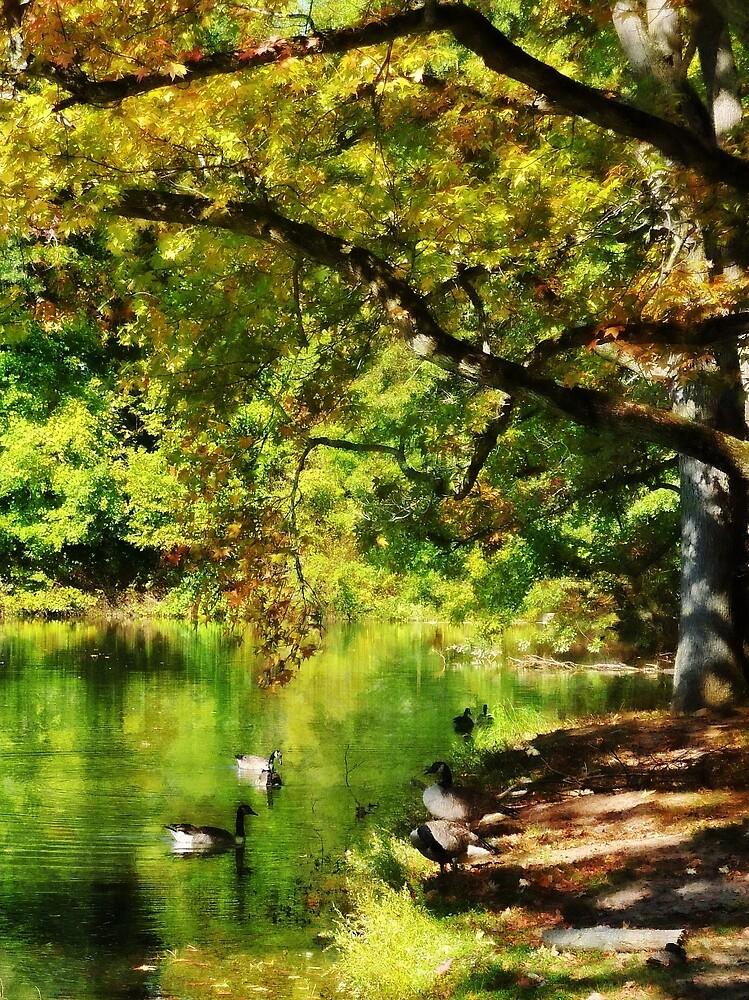 Geese Swimming on Serene Lake by Susan Savad