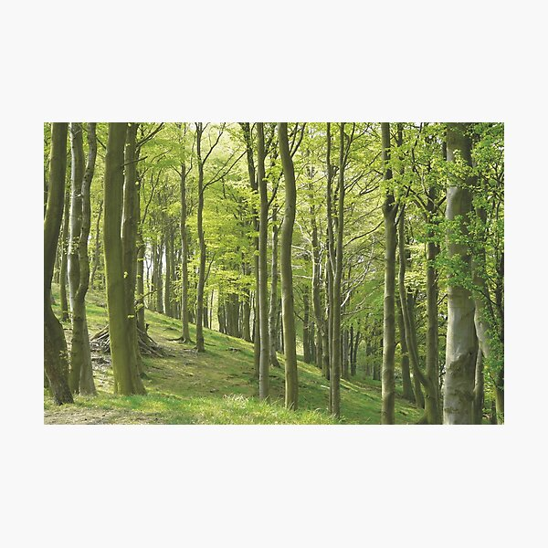 Woodland Slope in Yorkshire Photographic Print