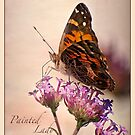 Painted Lady, with border by Victoria Jostes