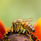 Collecting Pollen by Ellesscee