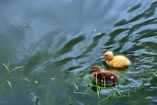 Out For A Swim by Carla Jensen