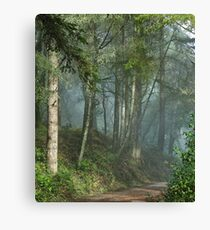 Cowell trail in the fog Canvas Print