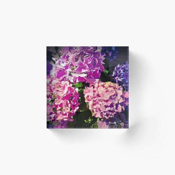 Phlox - a shining sea of flowers Acrylic Block