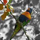 Rainbow Lorikeet by Maree Toogood