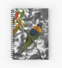 Rainbow Lorikeet Spiral Notebook
