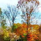 Tall Autumn Trees by Susan Savad
