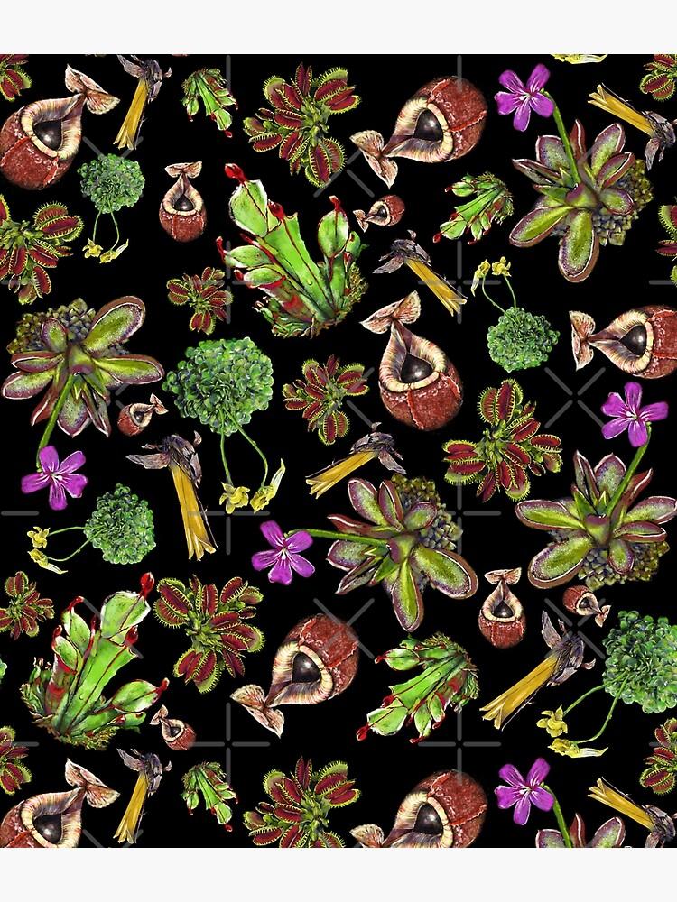 Carnivorous plants black background by rainetteillus