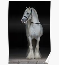 Magic Gypsy Cob Poster