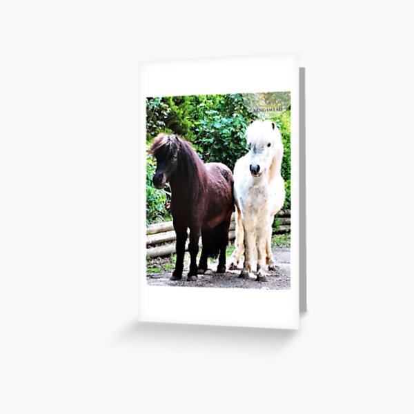 Joey and Gizmo's Collection Greeting Card