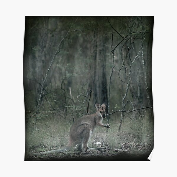 Wallaby Teatime II Poster