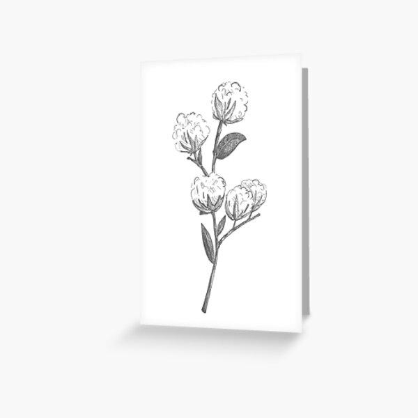 Wild Cotton Branch Greeting Card