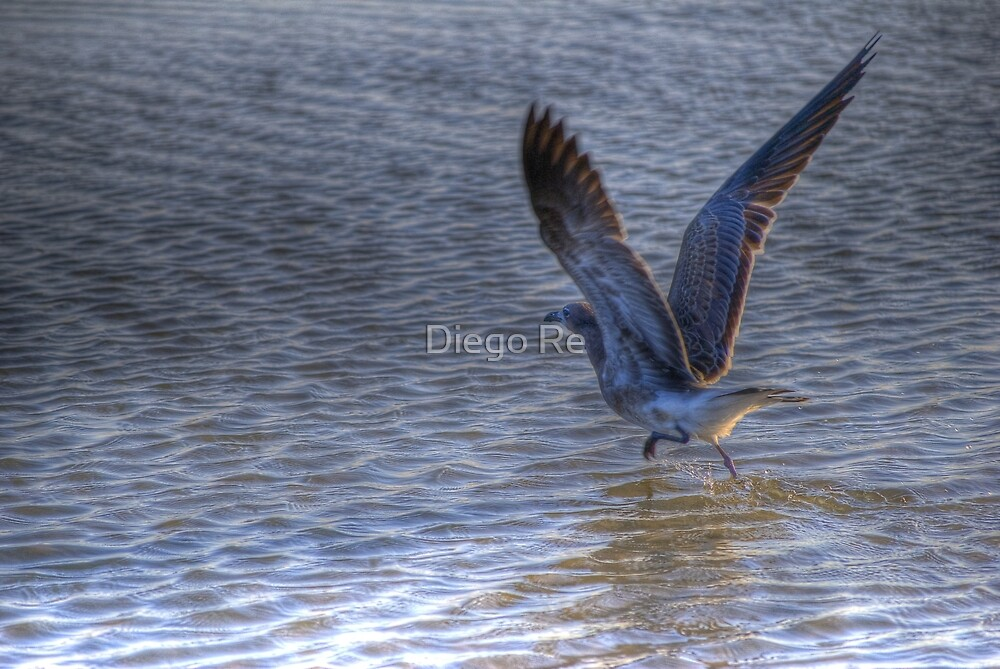 Taking Off by Diego Re