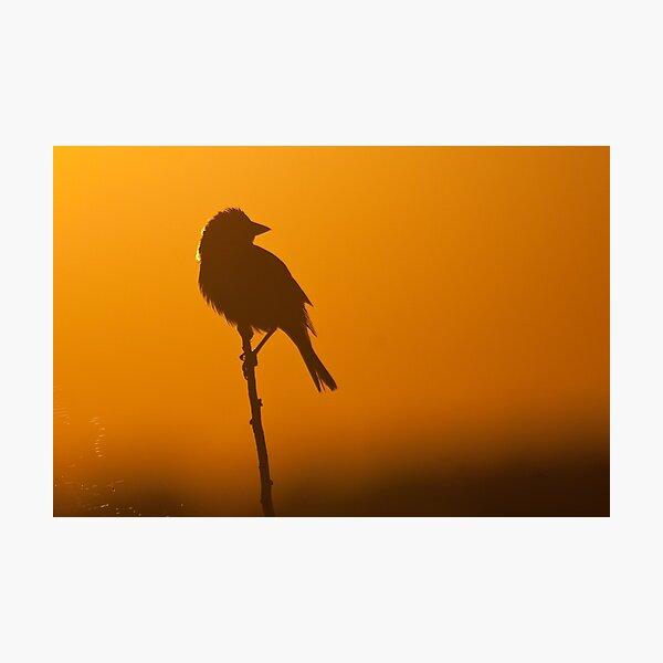 Orange. Photographic Print