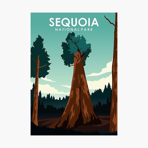 Sequoia National Park Photographic Print
