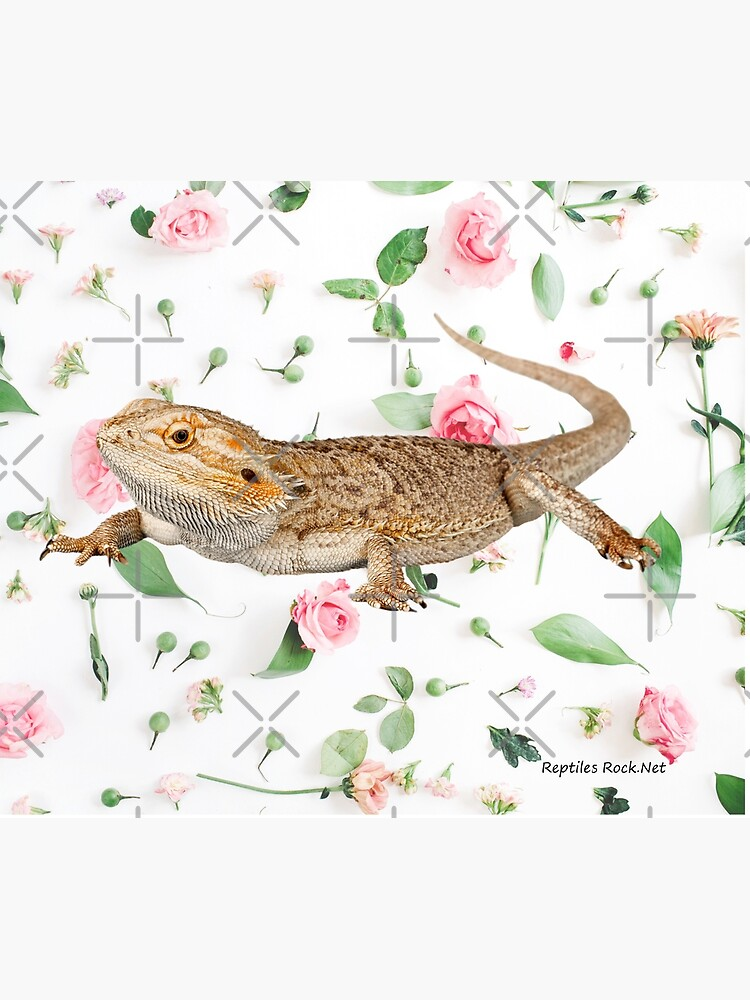 Bearded Dragon On A Carnation Background by snibbo71