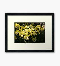 Sunny Daffodil Garden - Enjoying the Beauty of Spring Framed Print