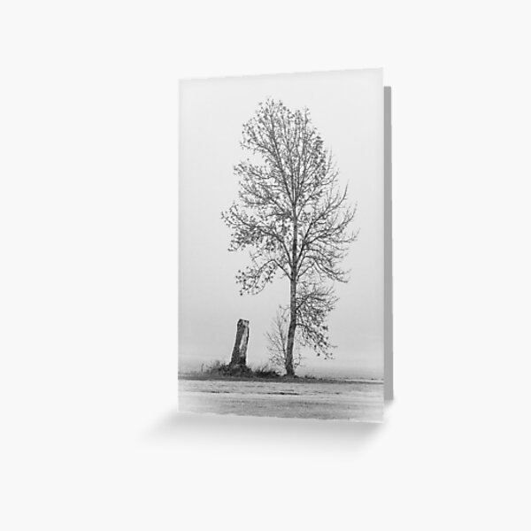 Small Sapling next to a Stump in the Fog Greeting Card