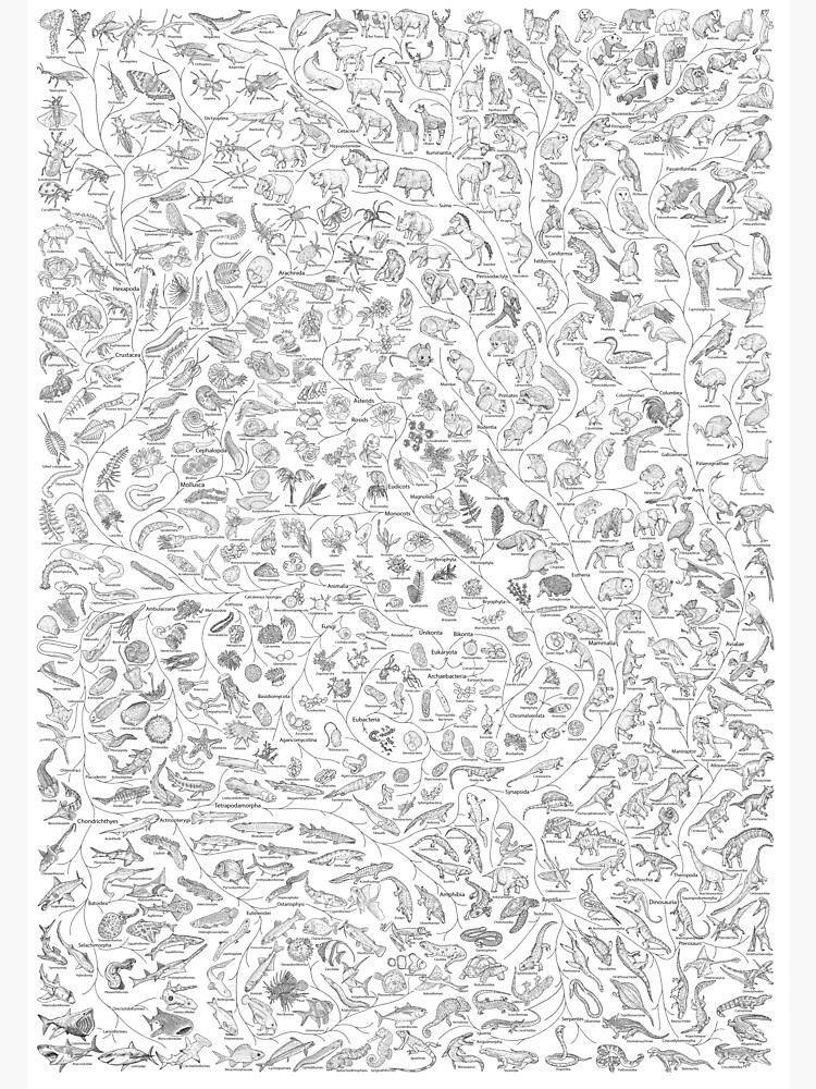 Tree of Life - Animal Evolution - Black & White (Annotated) by EvolutionPoster