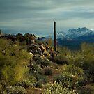 A Desert Winter by Sue  Cullumber