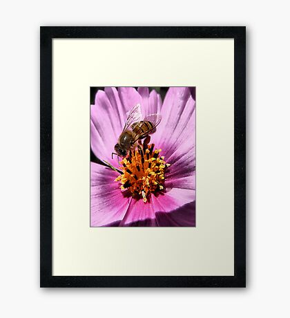 Collecting For The Hive Framed Print