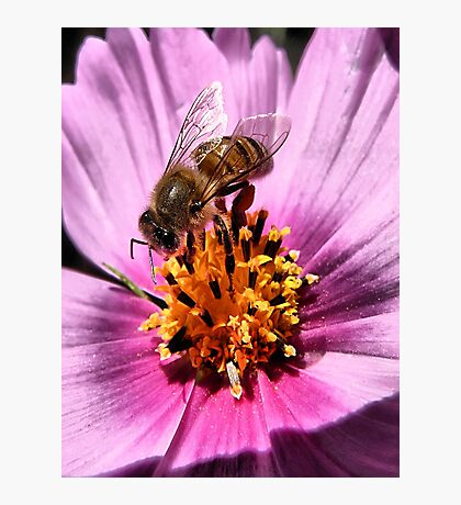 Collecting For The Hive Photographic Print