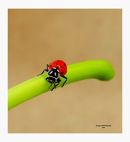 Wow! What A Day      ( LadyBug Series) Photographic Print