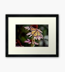 Monarch Butterfly on Purple Coneflower Framed Print