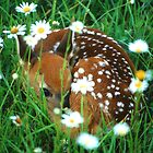 Fawn & Wildflowers by WorldDesign