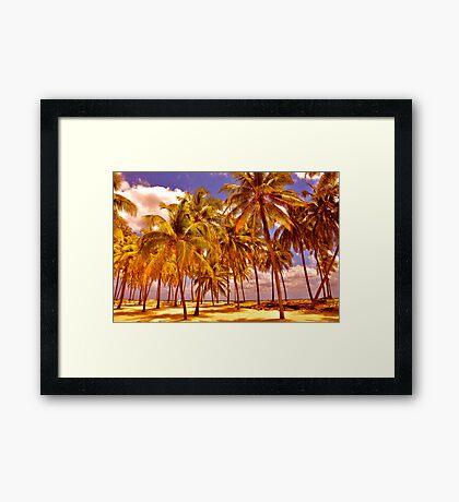 Palms on Half Moon Caye II  Framed Print