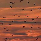 Flock away by Anitajuli