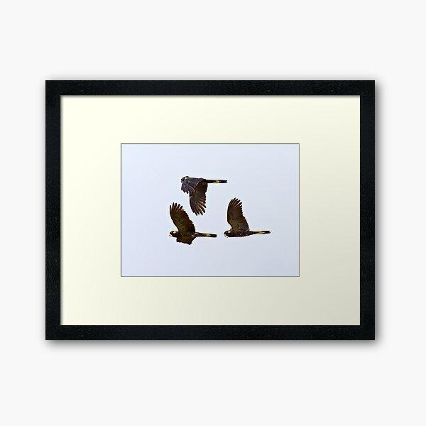 PARROT ~ Yellow-tailed Black Cockatoo BFztoNyH by David Irwin ~ WO Framed Art Print