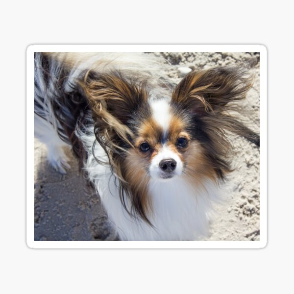Butterfly Dog Dogs Dog Lover Papillon Twill Tote Doggie Dog Tote Canine Dog Canine Gift Dog Gift Dog Show Dog Stuff Happy Pappy