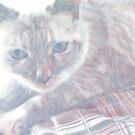 The softest kitty by biev