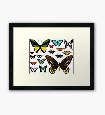 Butterfly Collection Framed Print