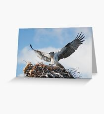 Returning to the nest - Osprey Greeting Card