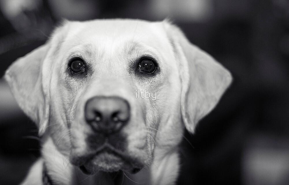 Puppy Dog Eyes II by Josie Eldred