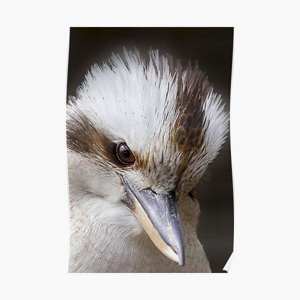 Australian Native Kookaburra Bird Wildlife Portrait Poster