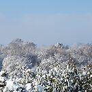 Ashurst Wood Snow by Sue Robinson