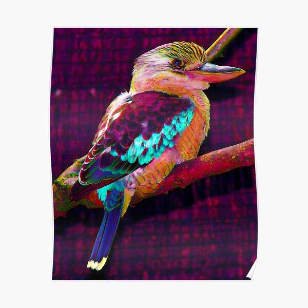 Australian Native Kookaburra Bird Wildlife Portrait POP ART Poster