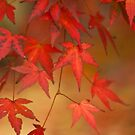 Autumn Tones by imagejournal