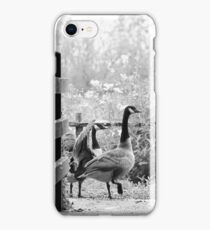 Greylag geese walking past iPhone Case/Skin